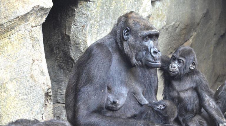 El Bioparc de Valéncia cumple 10 años  con una campaña para salvar murciélagos