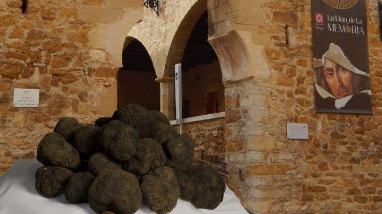 La XV Mostra de la Trufa Negra del Maestrat Castelló Ruta de Sabor impulsa el turismo de los pueblos de Castellón