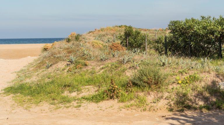 Todas las playas de Oliva mantienen sus altas calificaciones de calidad