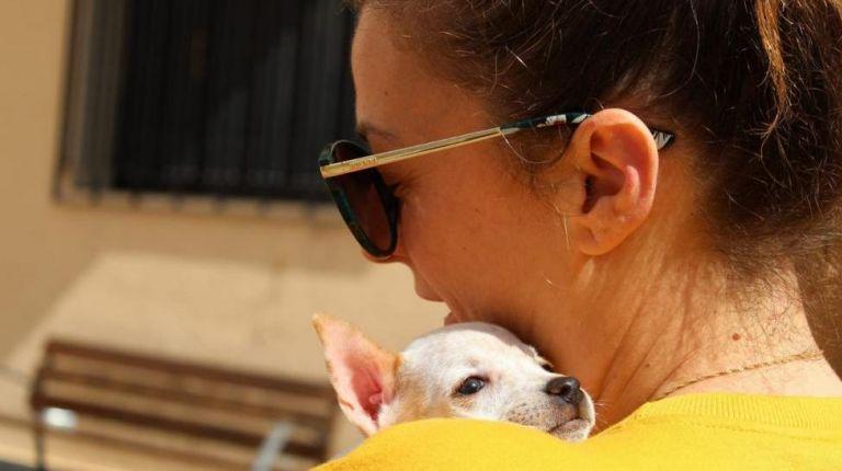 L'Alfàs acoge un festival para favorecer la adopción de animales