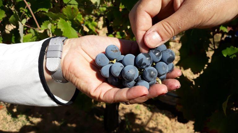Del Tros al Plat reivindica la viña autóctona como garantía de calidad en los nuevos productos turísticos