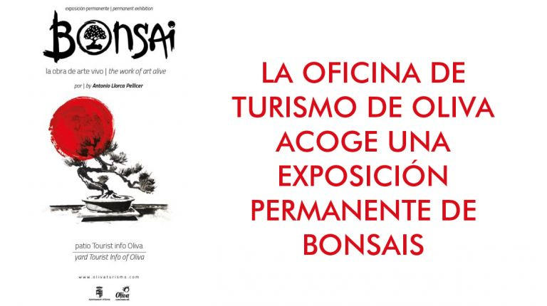 Exposición permanente de Bonsais en la Oficina de Turismo de Oliva