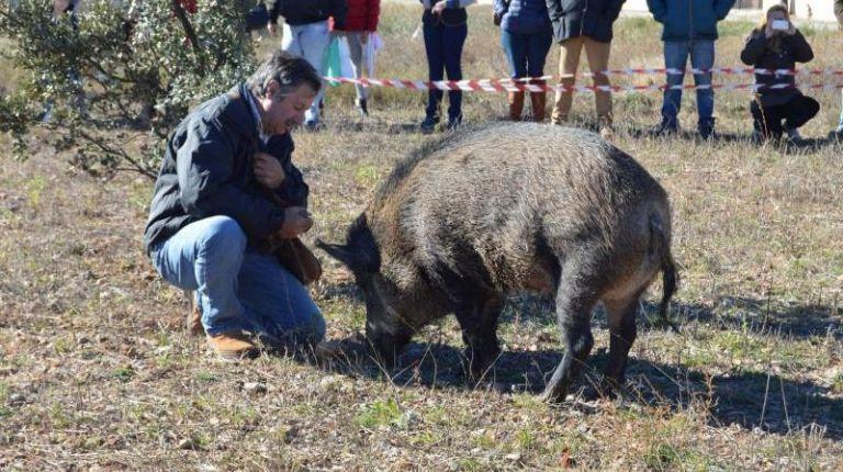 XV Feria de la Trufa y Productos Artesanos en El Toro