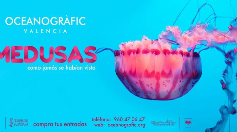 La exposición de medusas más grande de Europa, en Valencia.
