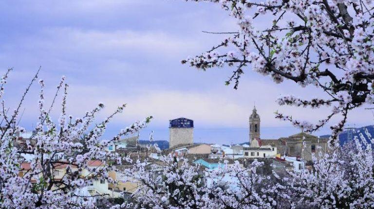 El esplendor de los almendros en 'Alcalalí en flor' acompañados de la Feria de la Tapa